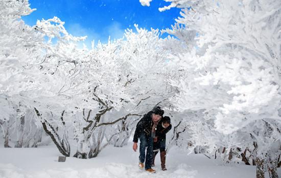 日本一山上树冰展现自然冰雪艺术游人沉醉(图)