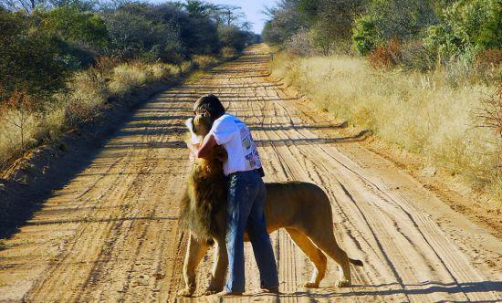 非洲男子养狮子当宠物 亲吻拥抱关系亲密(组图)