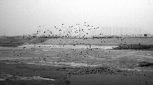南水进京半月送来水量相当于8个昆明湖