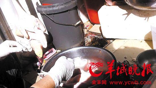 在深圳福田区一个街市,鸡档主正在宰杀活鸡