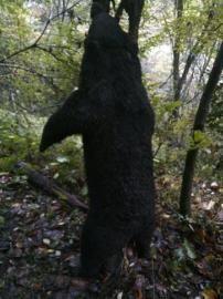 被猎杀的黑熊。(图片均为警方提供)