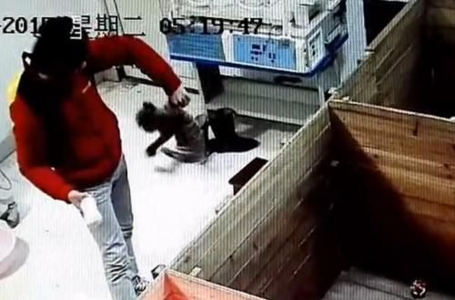 饲养员被曝虐待新生华南虎拍打幼虎头部(图)