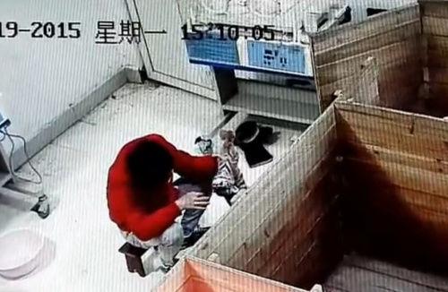 饲养员被曝虐待新生华南虎 拍打幼虎头部(图)
