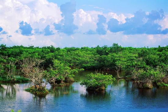 东寨港国家级自然保护区修复3000亩红树林