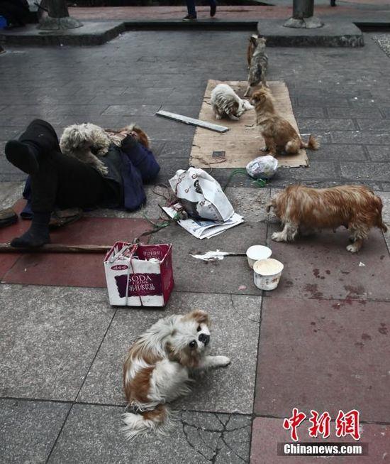 """七旬老人组建""""流浪狗要饭团"""" 阵容强大"""
