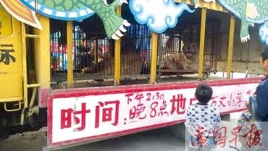 一头母狮惊现陆川街头 从马戏团逃脱吓坏群众(图)