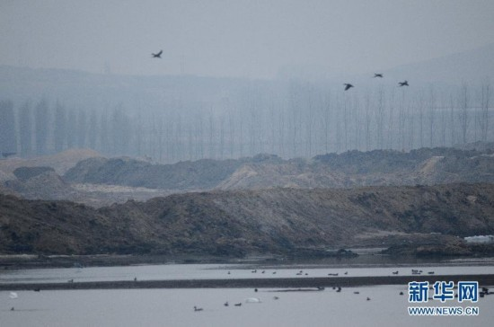 青岛平度湿地遭破坏 候鸟生存环境堪忧