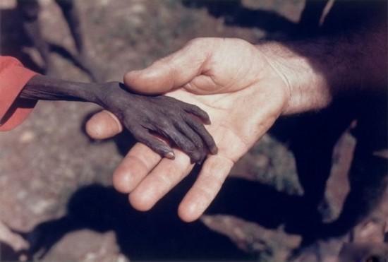 这世上最撼动人心的照片 张张催泪