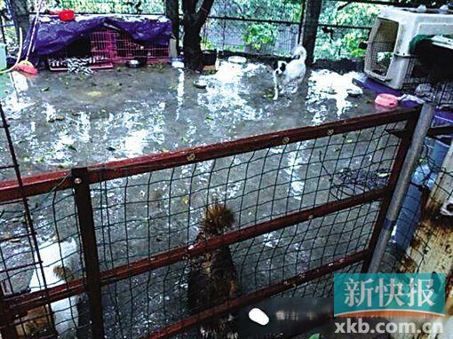 到处募捐的土华救助站 猫狗在泥地里挣扎求存