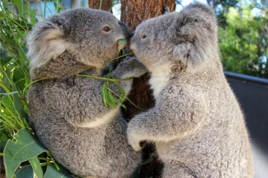 它们在动物园里自由嬉戏,很多动物是动物园通过救助才存活下来,图片