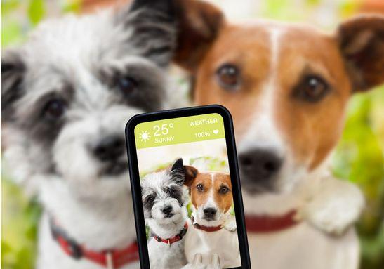 国内现第一奇葩职业看在家养狗如何赚钱