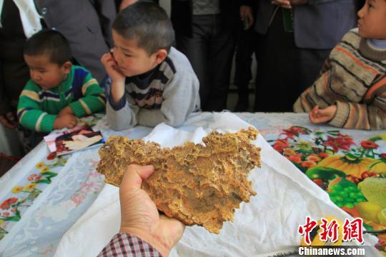 新疆一牧民捡到7850克天然金块形似中国地图(图)