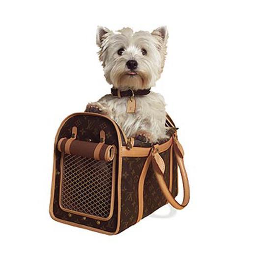 穿上名牌 走入上流宠物时尚圈