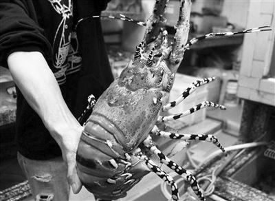 """龙虾属于海鲜吗_高汤龙虾""""大获全胜""""吃出海鲜好滋味"""