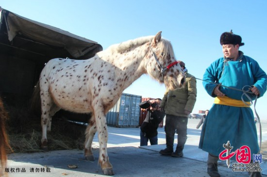 习近平夫妇获赠的两匹蒙古马入境[组图]