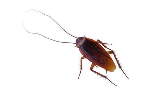 美奇葩情人节活动:用前任姓名为蟑螂命名