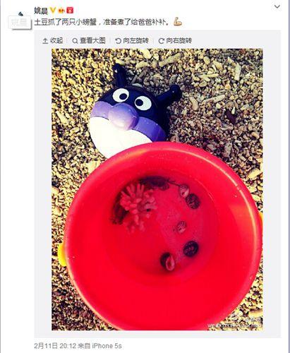 姚晨儿子抓小螃蟹给爸爸补身体网友赞其可爱(图)