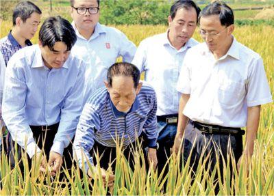 只有水稻是亲爱的 近距离