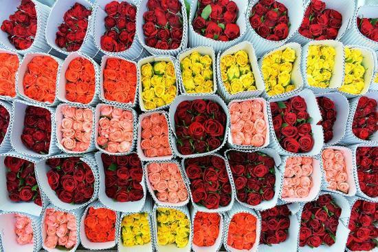 印度情人节前玫瑰畅销
