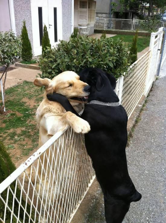 趣味摄影:小动物告诉你 这个世界充满爱