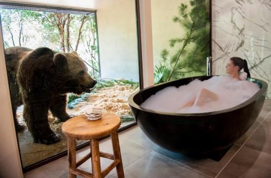 别出心裁!澳动物园动物窝里开宾馆