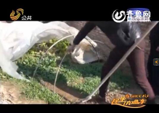 菏澤巨野縣村民私自種罌粟 自稱拿來當涼菜