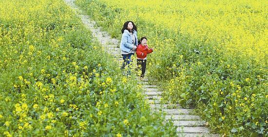 2月20日,大邑县桤泉镇,前来踏春的孩子从油菜花地里跑过。四川日报记者 何海洋 摄