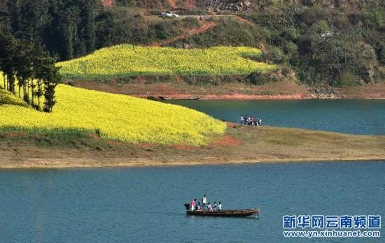 (生态)(1)云南罗平油菜花盛开迎游客