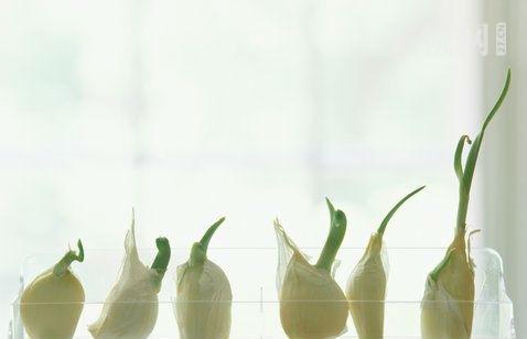 没有发芽的种子感悟及最后情感 种子发芽开花的感想