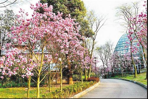 南山植物园800种山茶花竞开