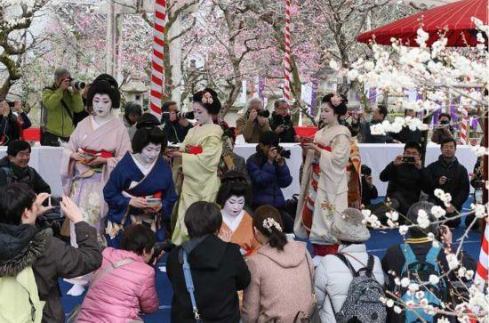 日本京都北野天满宫梅花祭开幕 舞妓以茶待客