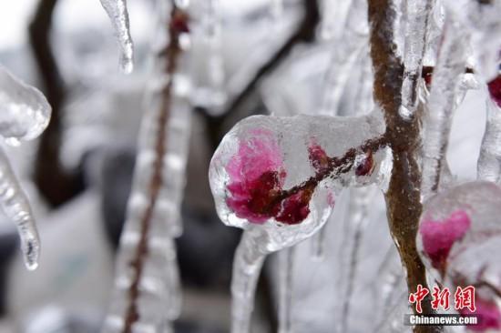 浙江杭州冻雨美景醉游人
