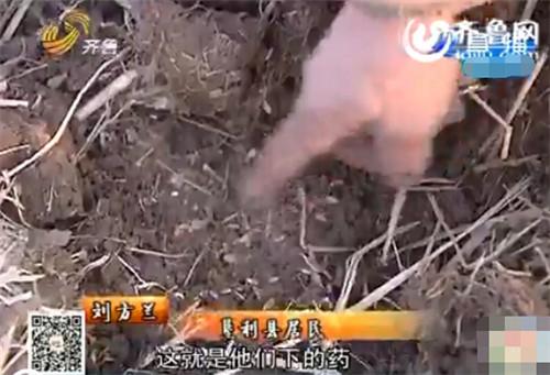 劉芳蘭在河邊找到的被下藥的稻谷。(視頻截圖)