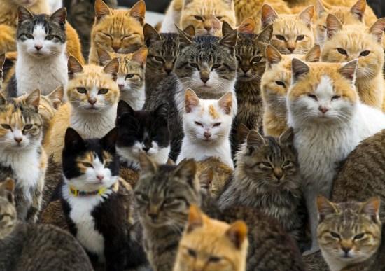 """日本""""猫岛""""上猫比人多吸引大批游客慕名看猫(图)"""