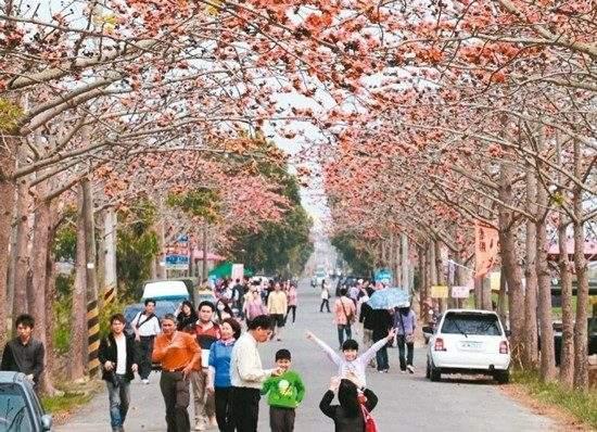全球15条最美花道台南一木棉花道上榜(图)