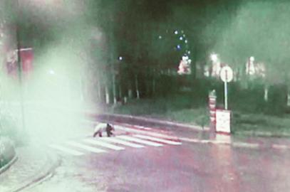 """大熊猫进城""""闹元宵""""过马路只走斑马线"""