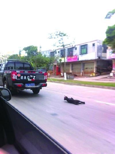 男子被指开皮卡虐狗 回应:不知车后拴着狗