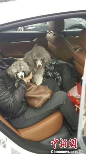 玛莎拉蒂车主大意被锁车外 车内贵宾犬帮开门