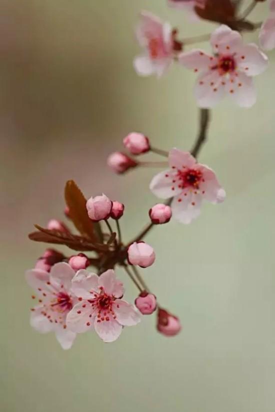 推荐7个浪漫桃花地,一起去赏桃花雨