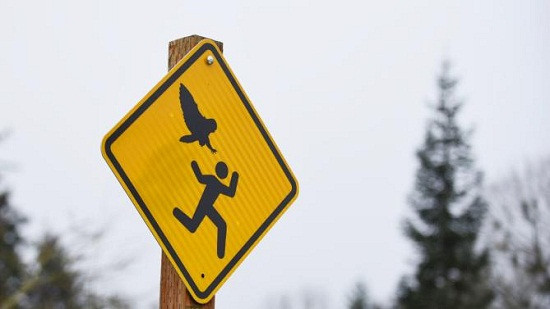 美国一公园猫头鹰频攻击民众警示牌意外走红(图)