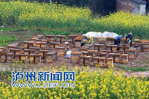 有花盛开的地方,就是张乃平、禹慧英夫妻工作的地方。常年追逐花期,夫妻俩几乎跑遍了半个中国。