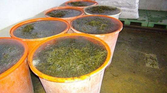 高雄黑心海带掺工业添加物初估40吨流入市面(图)