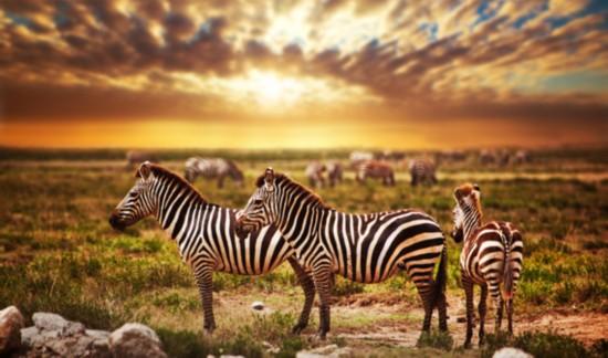这里每年都会上演着非洲大陆一年一度的动物大