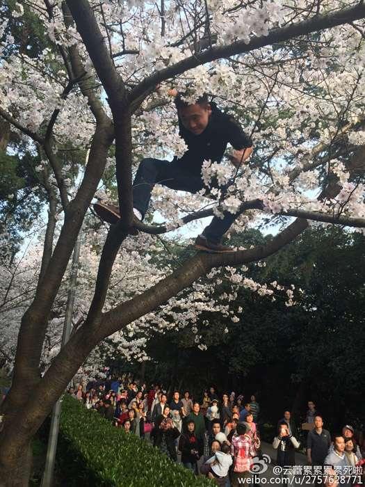 造花雨、扔垃圾 赏樱游客的不文明行为