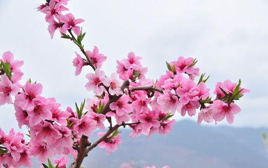 来京城做个唐伯虎般的桃花仙人