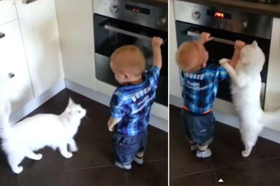 莽撞宝宝不知危险玩烤箱机智母猫上前阻挠(图)