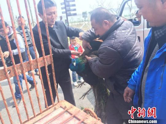 中学生没时间照顾宠物将10斤重蓝孔雀送给动物园