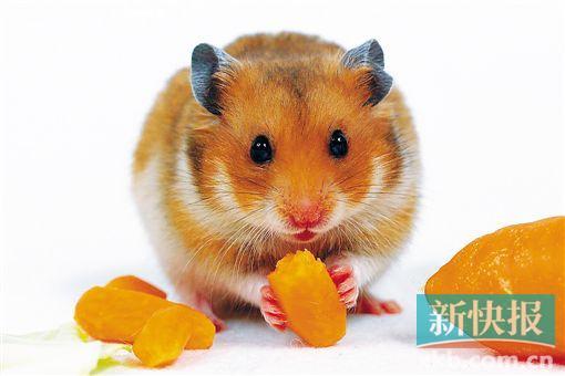 老鼠碰过的碗筷,清洗了还能用吗