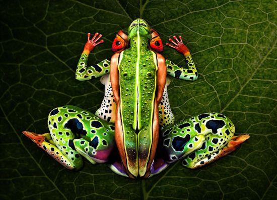 """意彩绘师惊奇创意 5名模特""""变""""青蛙"""