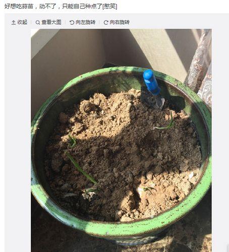 王宝强为吃蒜苗将大蒜种花盆中引网友调侃(图)